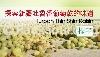 推广商品/消费性  >  探索新疆吐鲁番葡萄干/提子