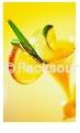 果汁香料整厂设备-乙农集团